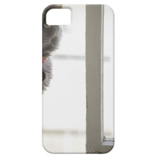 Cat by window iPhone 5 case