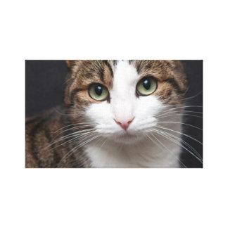 cat canvas prints