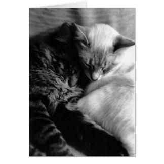 Cat Card #5