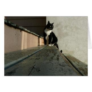 Cat cards, Brian in Albert Park Card