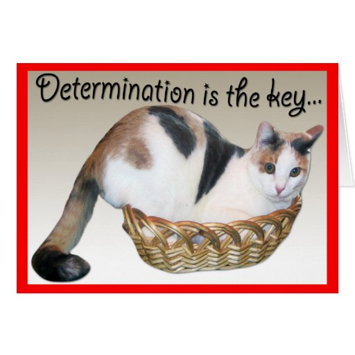 Cat Cards,Funny Encouragement to a Friend