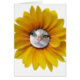 Cat Cards,Hello Sunshine,Any Occasion Card
