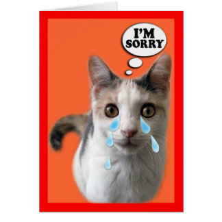 Cat Cards,I'm Sorry Card