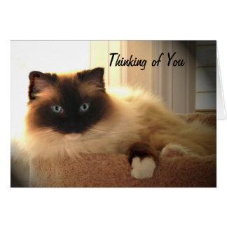 Cat Cats Ragdoll Ragdolls Kitty Card