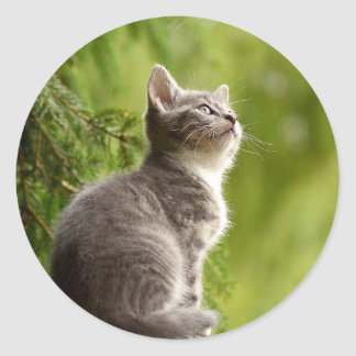 cat classic round sticker