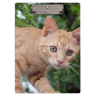 Cat Clipboard