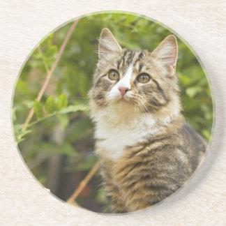 Cat Drink Coaster