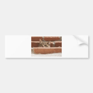 Cat Curious Young Cat Cat's Eyes Attention Wildcat Bumper Sticker