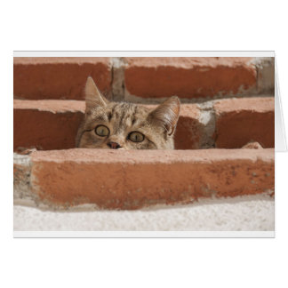 Cat Curious Young Cat Cat's Eyes Attention Wildcat Card