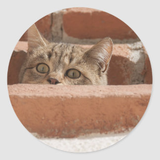 Cat Curious Young Cat Cat's Eyes Attention Wildcat Classic Round Sticker