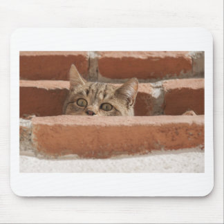 Cat Curious Young Cat Cat's Eyes Attention Wildcat Mouse Pad
