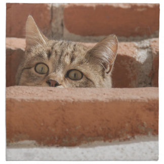 Cat Curious Young Cat Cat's Eyes Attention Wildcat Napkin