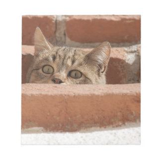 Cat Curious Young Cat Cat's Eyes Attention Wildcat Notepad