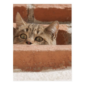 Cat Curious Young Cat Cat's Eyes Attention Wildcat Postcard