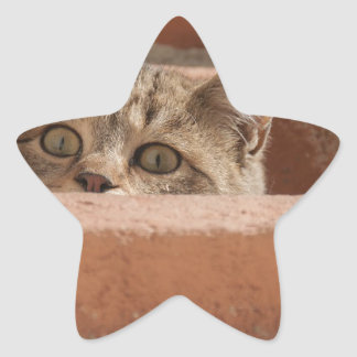 Cat Curious Young Cat Cat's Eyes Attention Wildcat Star Sticker