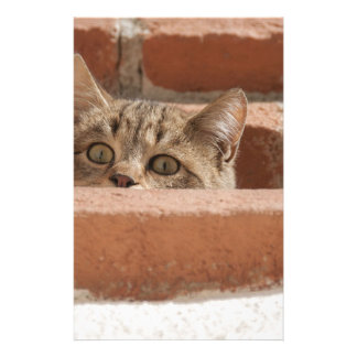 Cat Curious Young Cat Cat's Eyes Attention Wildcat Stationery