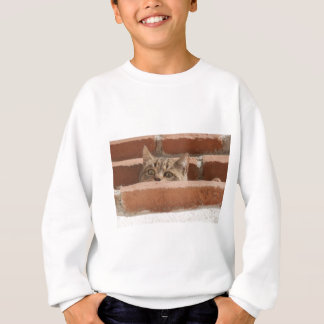 Cat Curious Young Cat Cat's Eyes Attention Wildcat Sweatshirt
