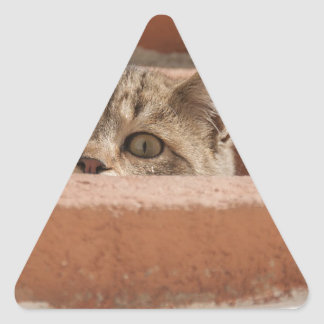 Cat Curious Young Cat Cat's Eyes Attention Wildcat Triangle Sticker
