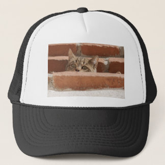 Cat Curious Young Cat Cat's Eyes Attention Wildcat Trucker Hat