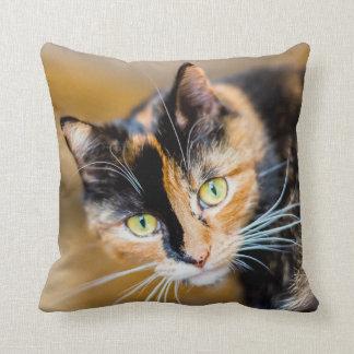 Cat Cushion 1