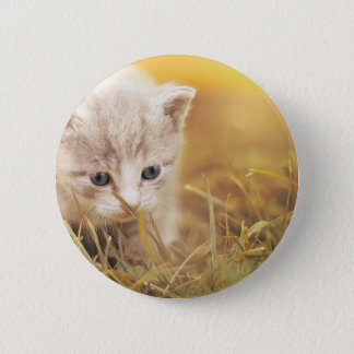 Cat Cute Cat Baby Kitten Pet Animal Charming 2 Inch Round Button