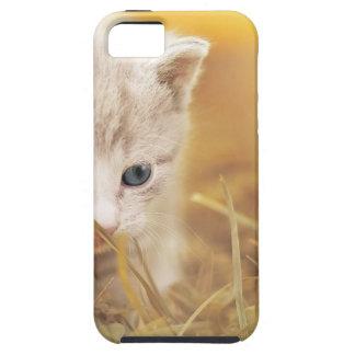 Cat Cute Cat Baby Kitten Pet Animal Charming iPhone 5 Case