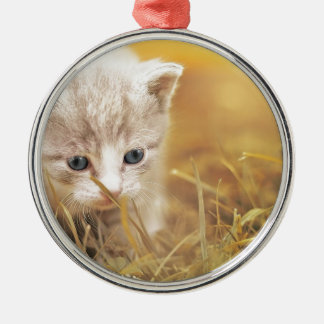 Cat Cute Cat Baby Kitten Pet Animal Charming Metal Ornament