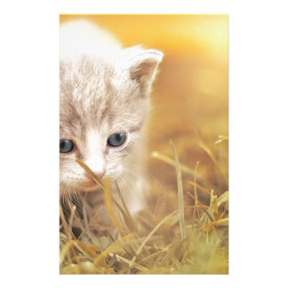 Cat Cute Cat Baby Kitten Pet Animal Charming Stationery
