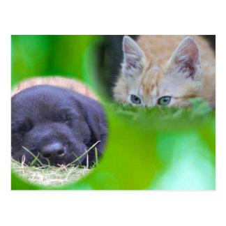 Cat & Dog Postcard