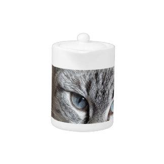 Cat Domestic Cat Kitten Mieze Mackerel Pet