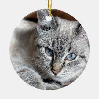 Cat Domestic Cat Kitten Mieze Mackerel Pet Ceramic Ornament