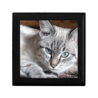Cat Domestic Cat Kitten Mieze Mackerel Pet Gift Box