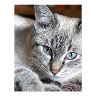 Cat Domestic Cat Kitten Mieze Mackerel Pet Letterhead