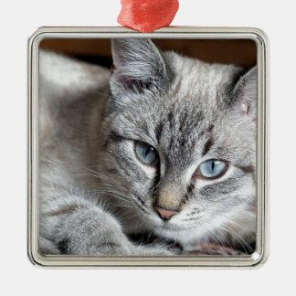 Cat Domestic Cat Kitten Mieze Mackerel Pet Metal Ornament