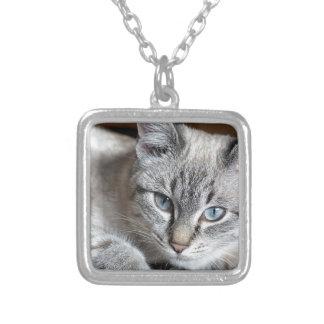 Cat Domestic Cat Kitten Mieze Mackerel Pet Silver Plated Necklace
