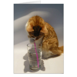 Cat Drinking from Straw Blank Note Card