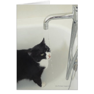 Cat Drinking Water Dripping From A Tap Card