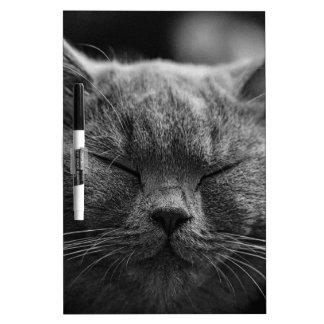cat dry erase board