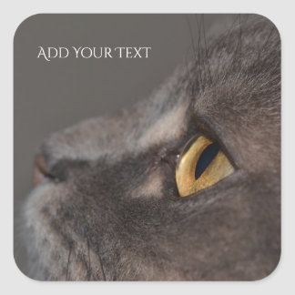 Cat Eye-Macro by Shirley Taylor Square Sticker