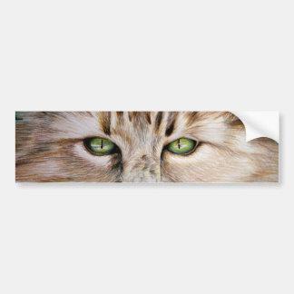 Cat Eyes Bumper Sticker