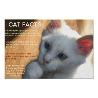 Cat facts! poster