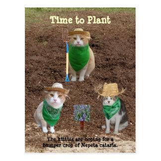 Cat Farmers Planting Catmint. Postcard