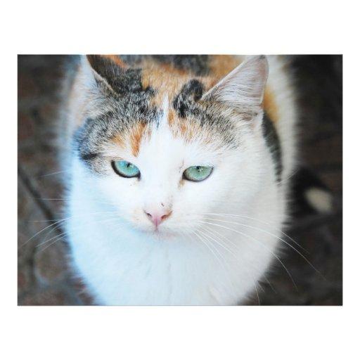Cat Full Color Flyer