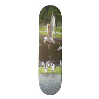 Cat flying a Seagull Skate Boards