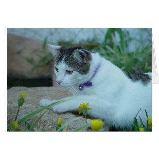 Cat Garden Gazing Card