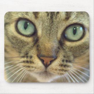 Cat Got Your Mouse? Mouse Pad