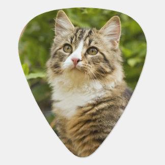 Cat Guitar Pick
