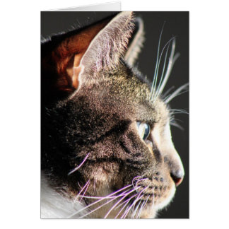 Cat head, profile card