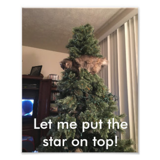 Cat helps decorate tree photo print