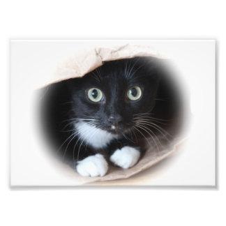 Cat in a bag photo print